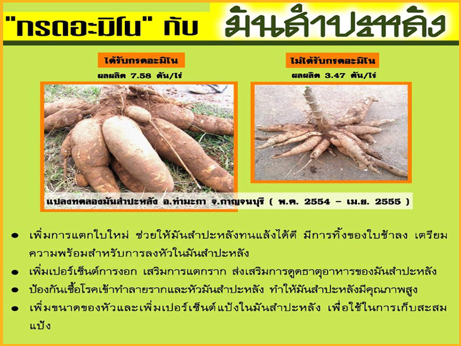 Test Result of Amino Acid to Cassava